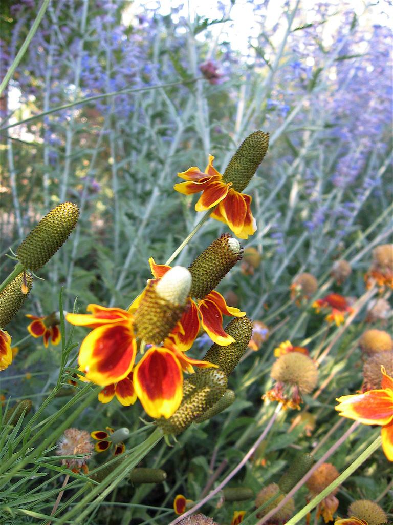 certified wildlife habitat in your backyard arizona landscape