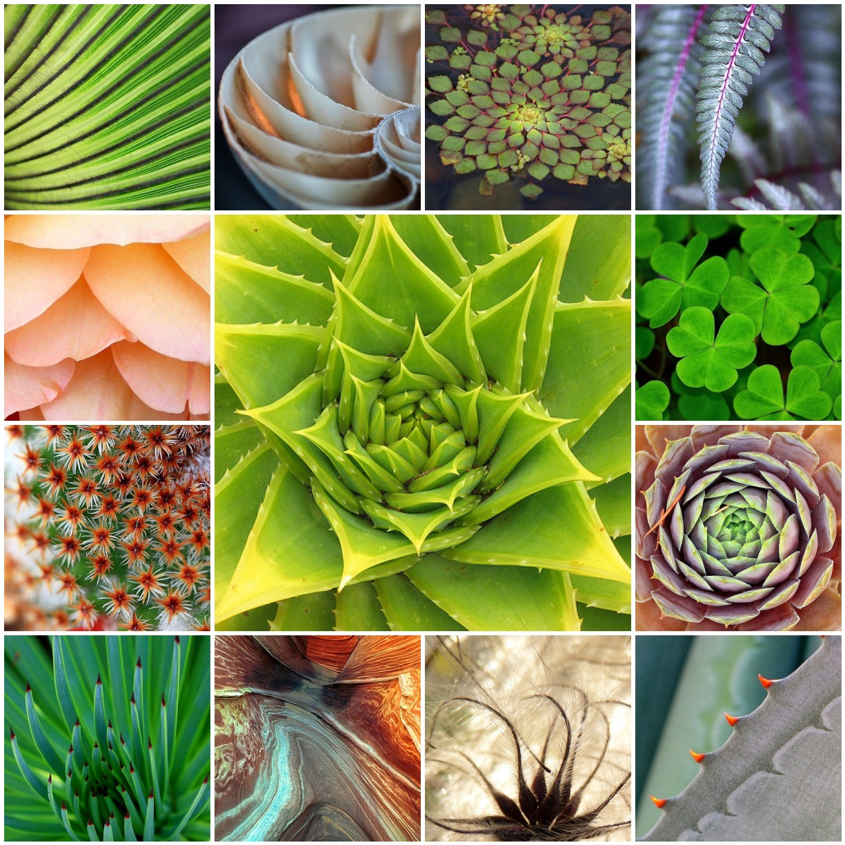 Natural Design Pattern Patterns in Nature