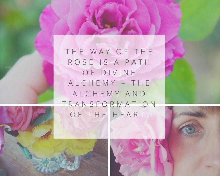 Sisterhood of the Rose