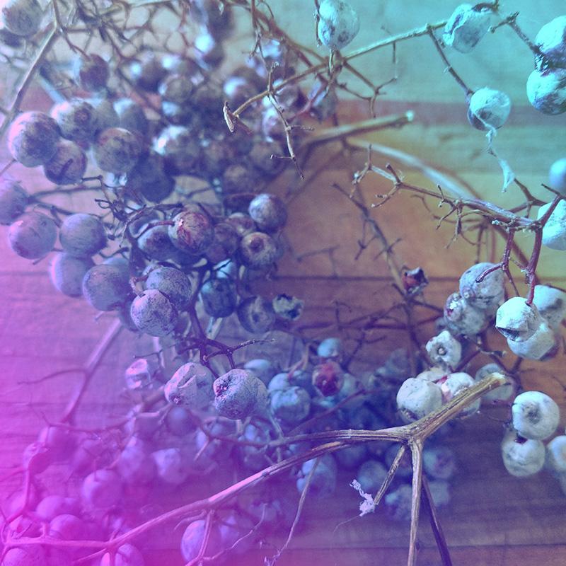 Elderberry Rainbow